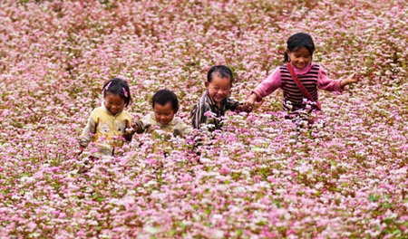 First Tam Giac Mach flower festival to be held in Ha Giang