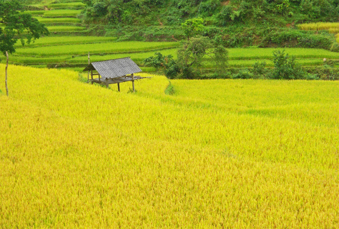Hagiang and Halong package tour in 7 days